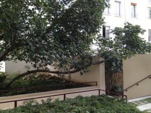 jardins-des-rosiers-2
