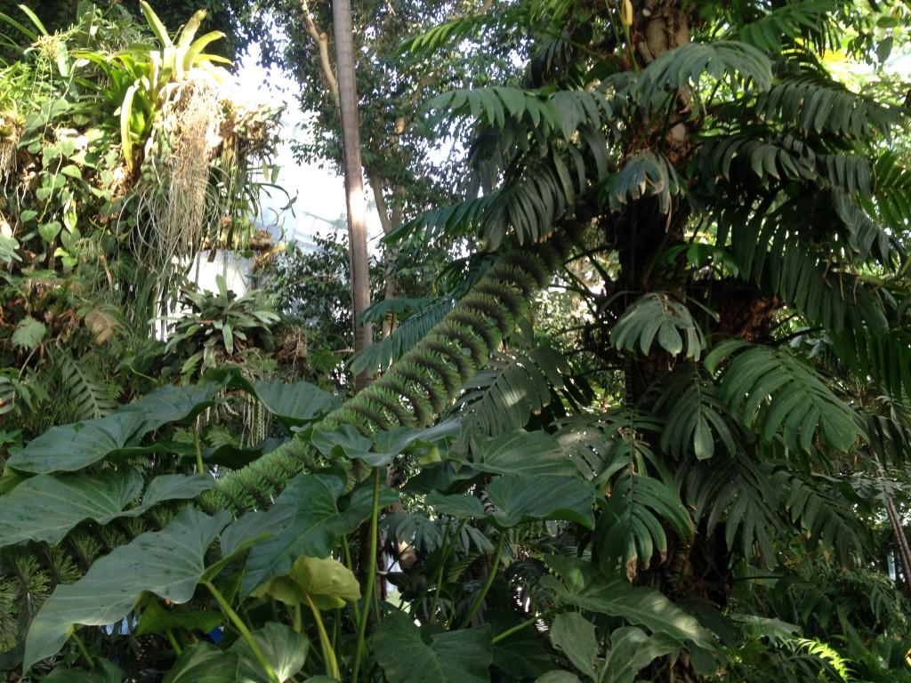 Voyage dans les grandes serres du jardin des plantes for Les plantes du jardin