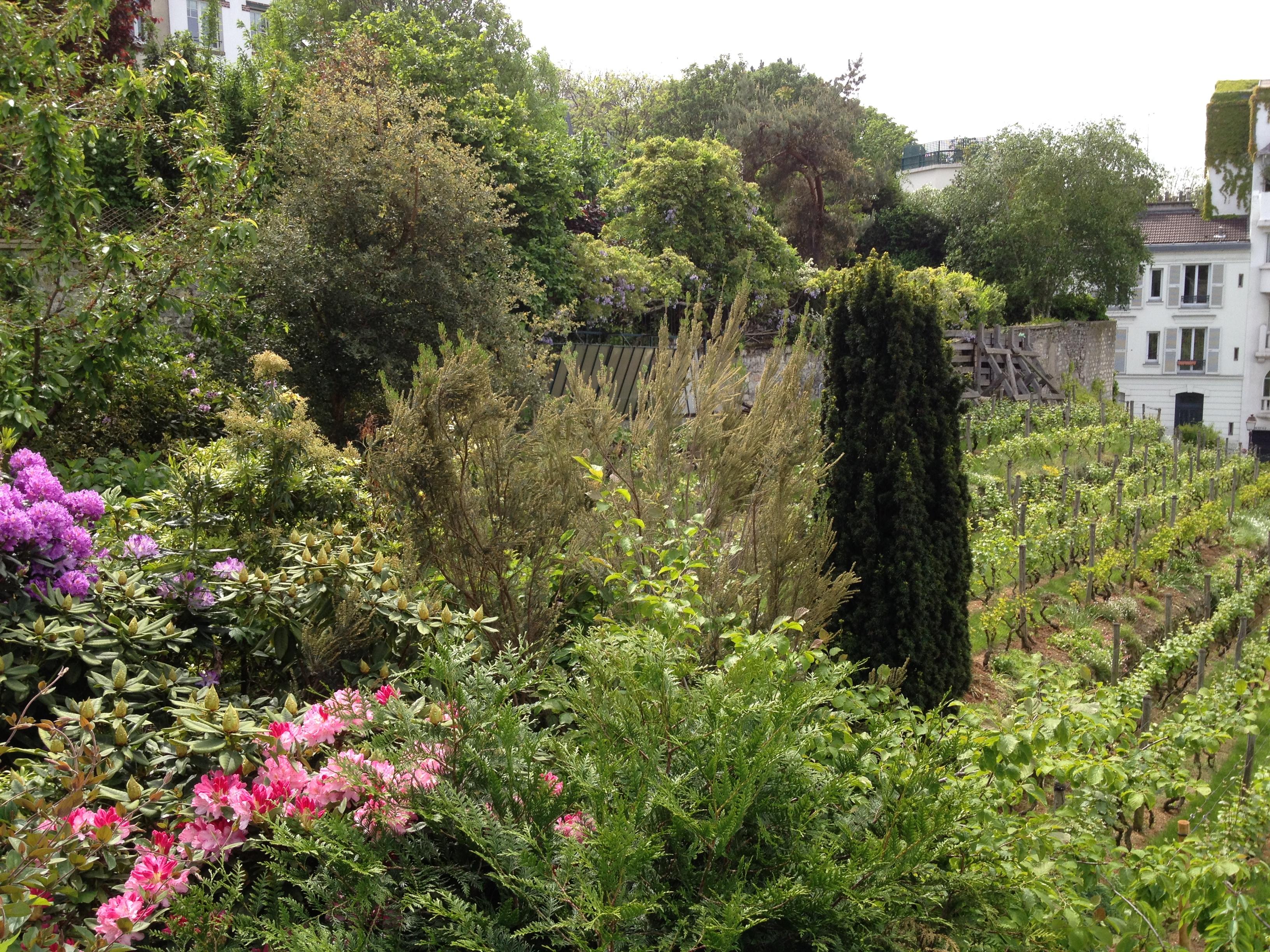 montmartre-jardins-renoir-pds6